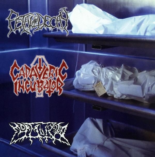 Fetal Decay / Cadaveric Incubator / Mortalized - Cadaveric Incubator / Fetal Decay / Mortalized