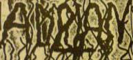 Adrian - Logo
