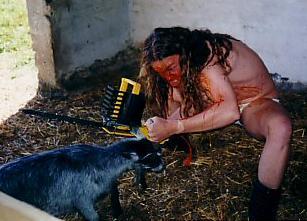 Goat - Photo