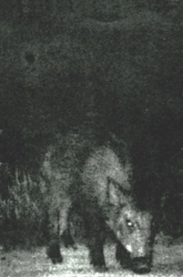 Ildjarn - Minnesjord