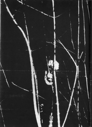 Black Murder - Photo