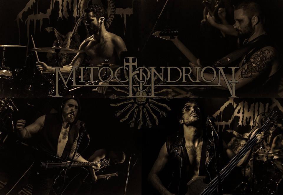 Mitochondrion - Photo