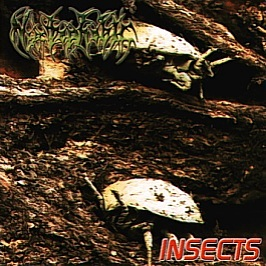 Nyctophobic - Insects