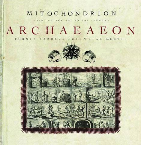 Mitochondrion - Archaeaeon