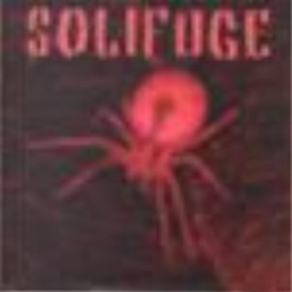 Solifuge - Solifuge