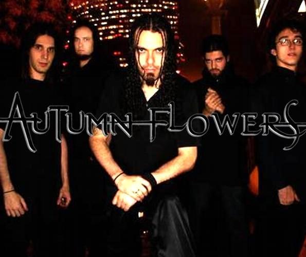Autumn Flowers - Photo