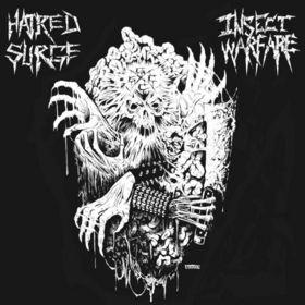 Insect Warfare / Hatred Surge - Insect Warfare / Hatred Surge