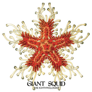 Giant Squid - The Ichthyologist