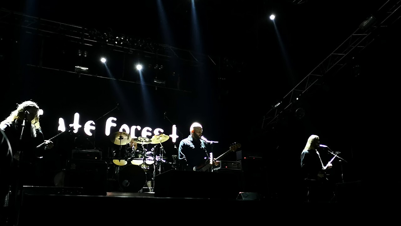 Hate Forest - Photo