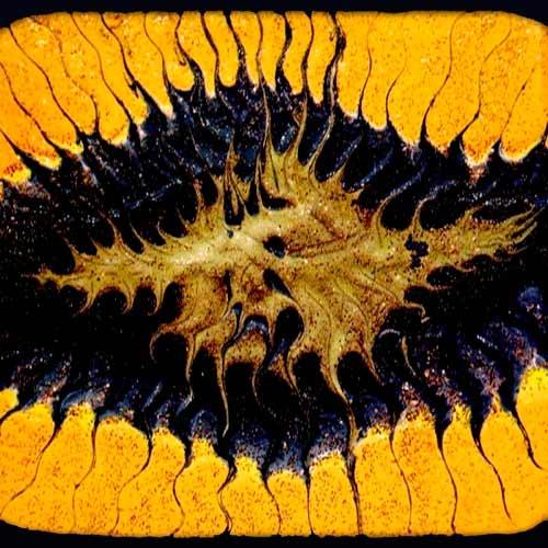 Coram Lethe - ...a Splendid Chaos
