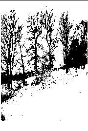 Forest Grave - Change & Renewal