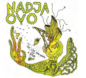 Nadja - The Life and Death of a Wasp