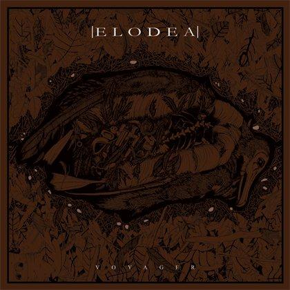 Elodea - Voyager