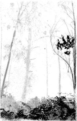 Forest Grave - Forgotten