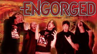 Engorged - Photo