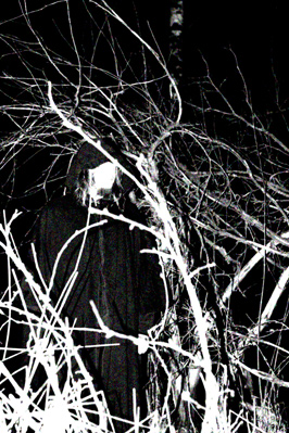 Misantropical Painforest - Photo