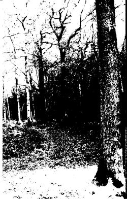 Forest Grave - Spring Rehearsal