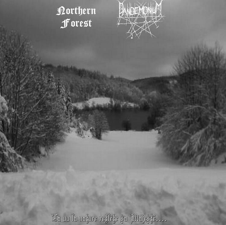 Northern Forest - Là Où La Nature Reflète Sa Majesté