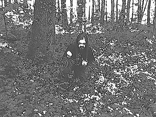 Hedensk Bjørn - Photo