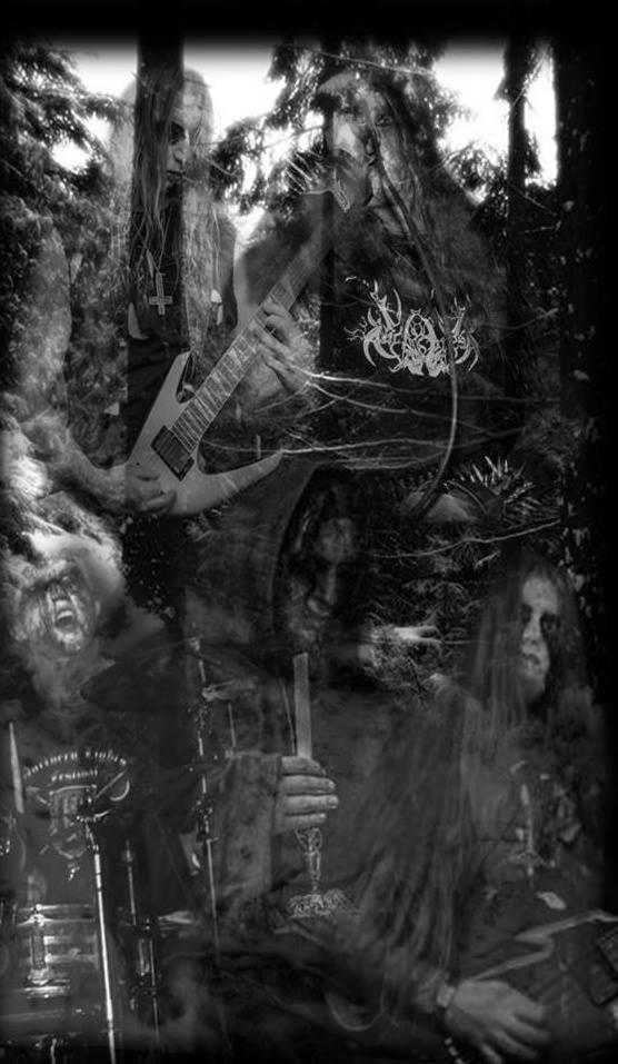 Nightforest - Photo