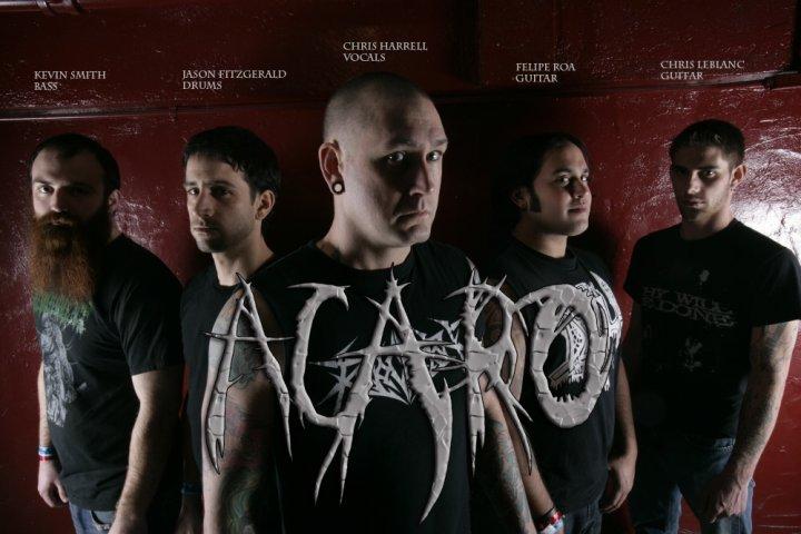 Acaro - Photo