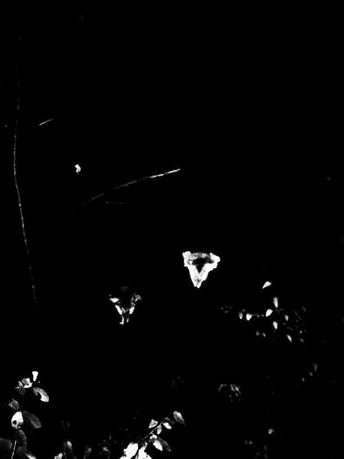 Obscurité - Photo