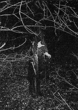 The Wampyric Specter - Photo
