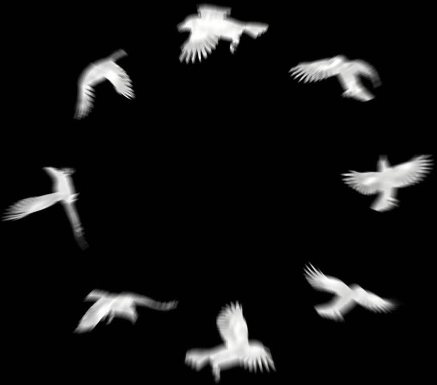 A Circle of Crows - Logo