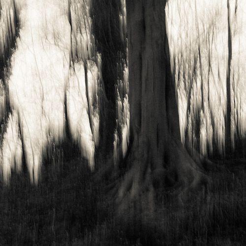 Overgrown / Frozen Dandylions - Frozen Dandylions / Overgrown