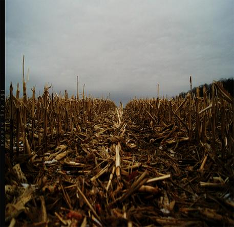 Vit - The Dry Season