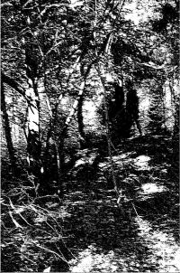 Forest Grave - Through Thickets and Trodden Paths