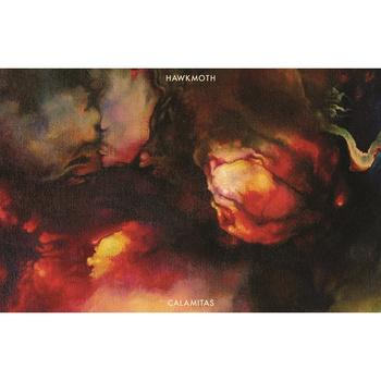 Hawkmoth - Calamitas