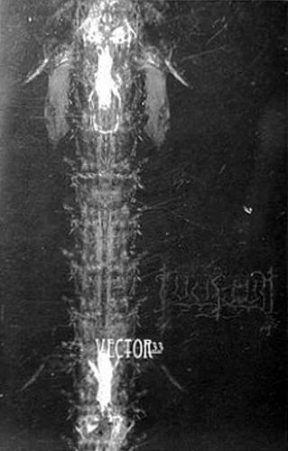 Lucifugum - Vector33