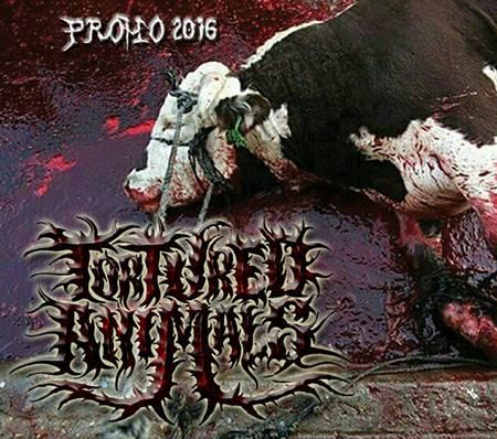 Tortured Animals - Promo 2016