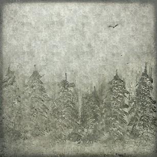 Nachteule - Errance hivernale
