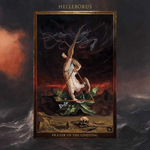 Helleborus - Prayer of the Undying