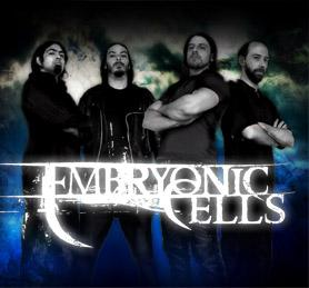 Embryonic Cells - Photo