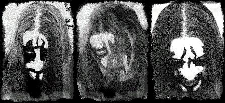 Wolftribe - Photo