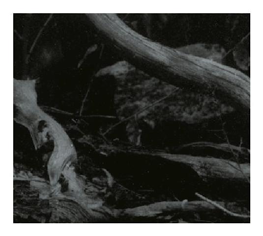 Barren Canyon - World of Wounds