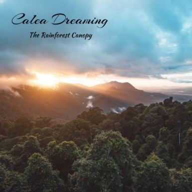 Calea Dreaming - The Rainforest Canopy