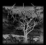 Mitochondrion - Mitochondrion