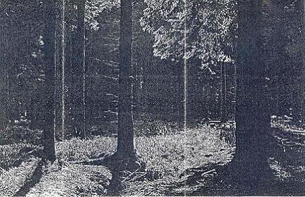 Inmitten des Waldes - Promo '04